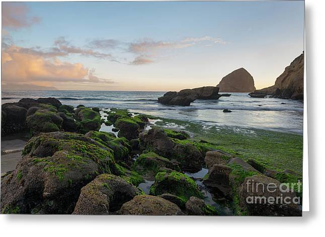 Mossy Rocks At The Beach Greeting Card