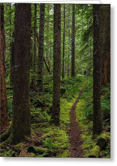 North Souixon Creek Mossy Trail Greeting Card