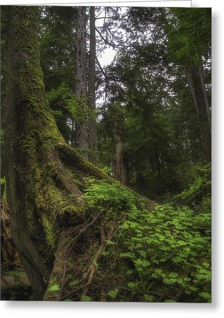 Mossy Tree Greeting Card by Chad Tracy