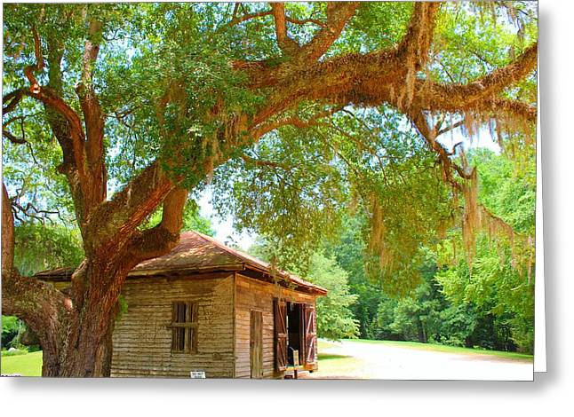 Mossy Tree In Natchez Greeting Card
