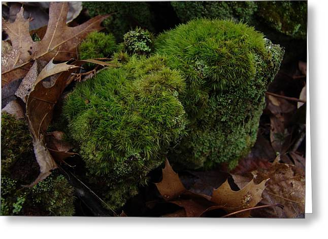 Mossy Wood 001 Greeting Card by Ryan Vaal