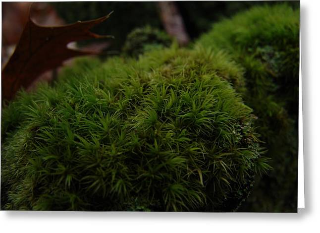 Mossy Wood 003 Greeting Card by Ryan Vaal