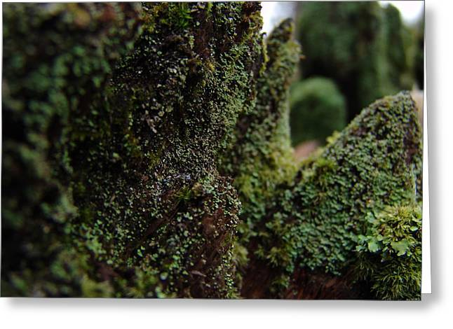 Mossy Wood 008 Greeting Card by Ryan Vaal