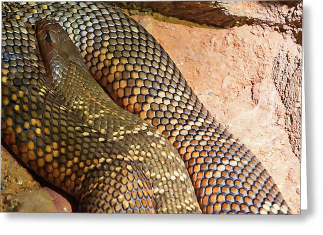 Greeting Card featuring the photograph Most Venomous Snake  by Miroslava Jurcik