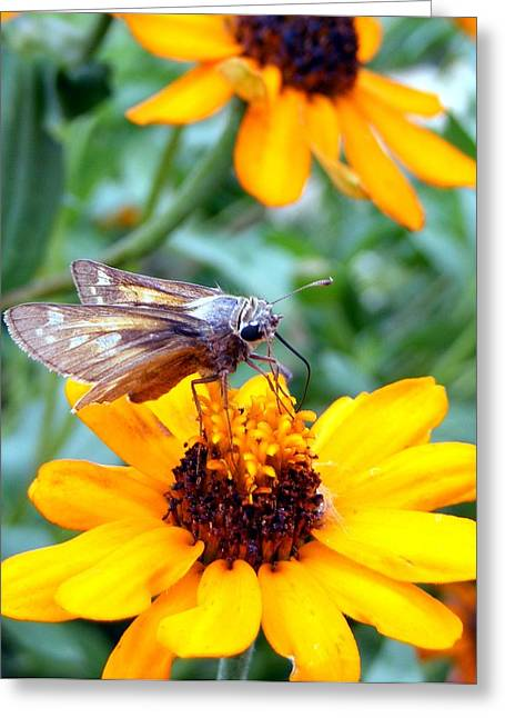 Moth  Greeting Card by D R TeesT