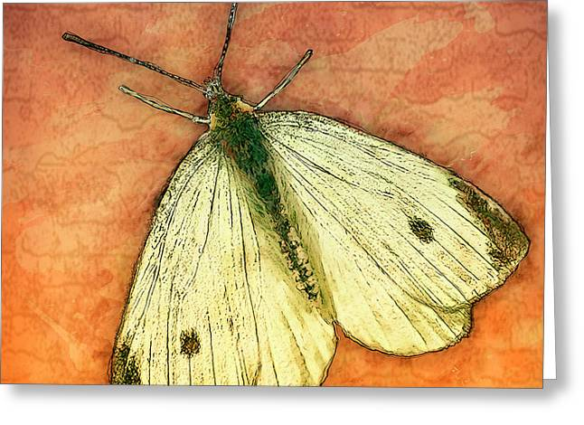 Moth Greeting Card by Jack Zulli