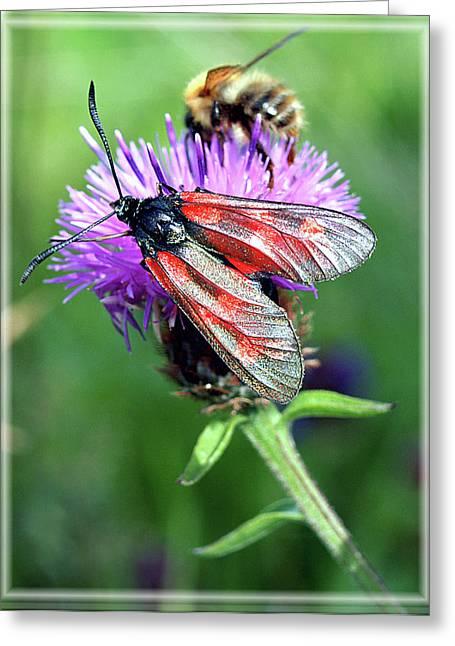 Moth Greeting Card by Joy Powell