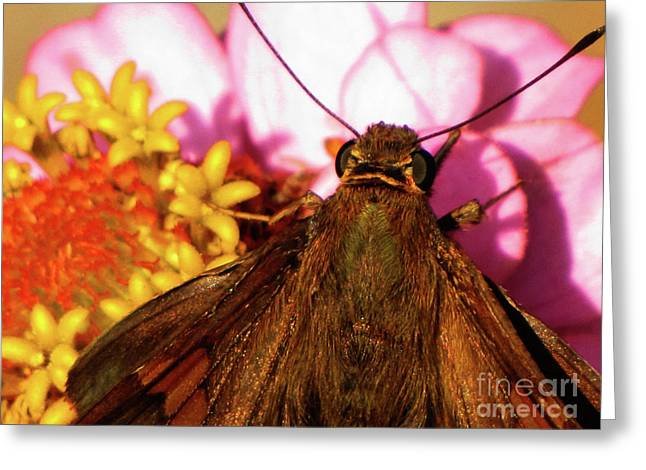 Moth On Pink And Yellow Flowers Greeting Card