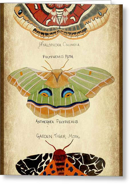 Moth Study Greeting Card