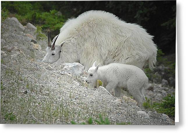 Greeting Card featuring the photograph Mother And Baby   by Dyle   Warren