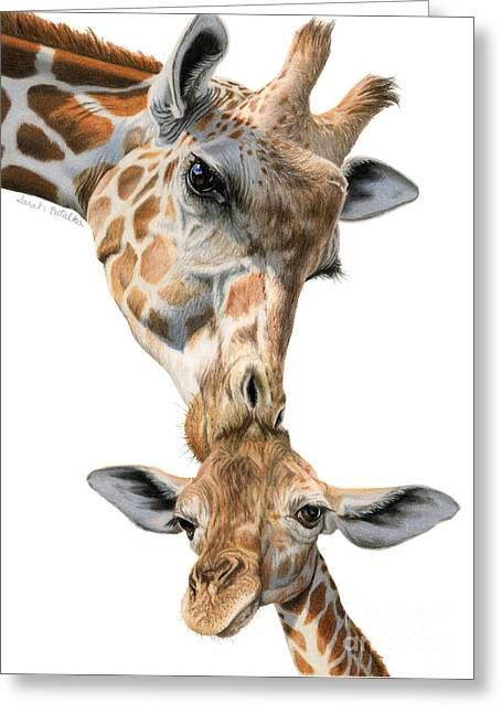 Mother And Baby Giraffe Greeting Card by Sarah Batalka