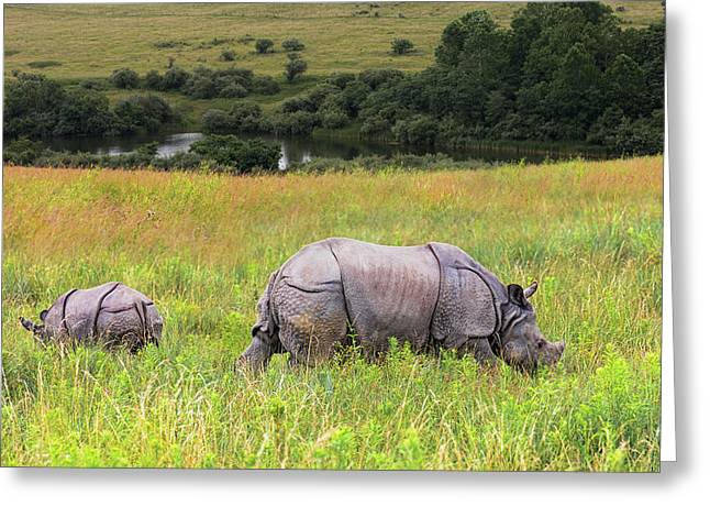 Mother And Baby Rhinos Greeting Card