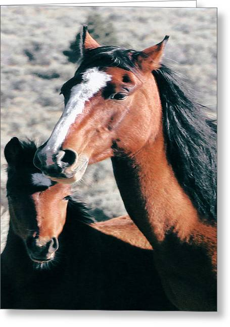Mother And Colt Wild Greeting Card
