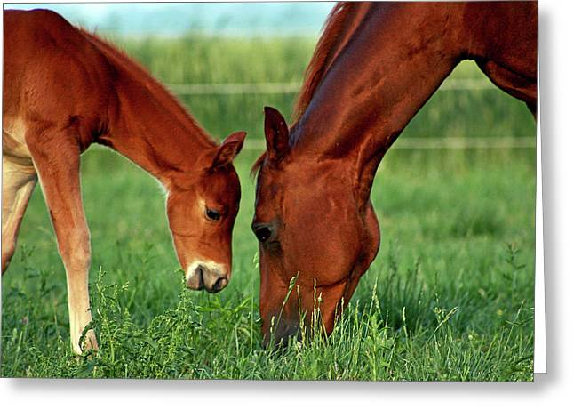 Mother And Foal 3377 H_2 Greeting Card