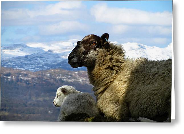 Mother And Lamb Greeting Card by RKAB Works