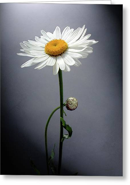 Mother Daisy Greeting Card