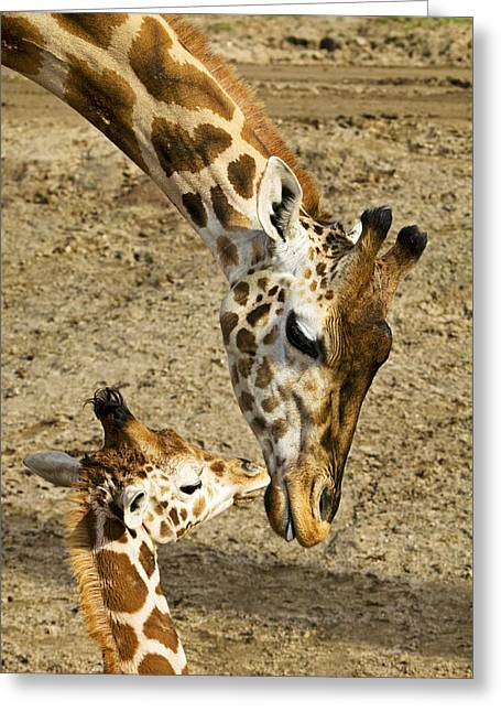 Babies Greeting Cards - Mother giraffe with her baby Greeting Card by Garry Gay