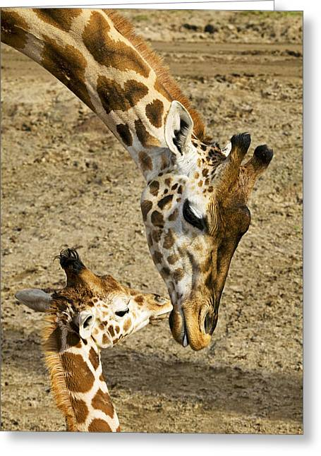 Mother Giraffe With Her Baby Greeting Card