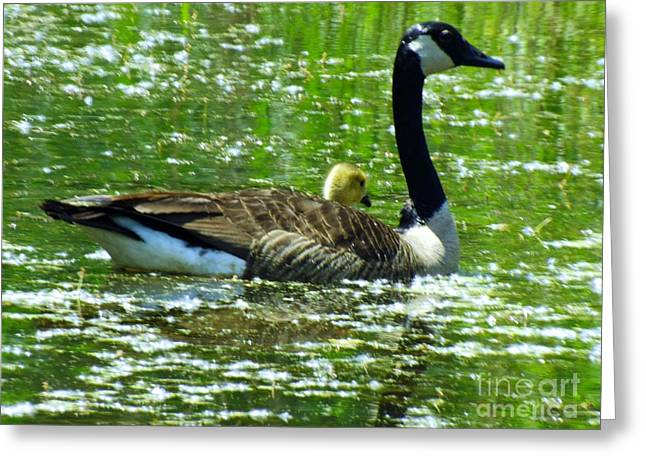 Mother Goose Greeting Card by Robyn King