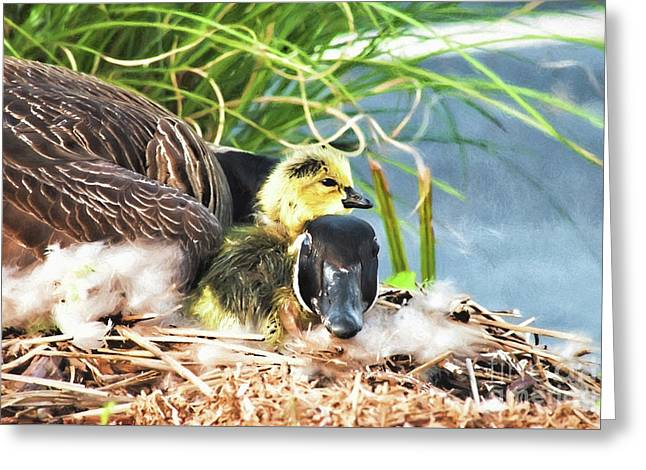 Mother Goose With Newborn Gosling  Greeting Card by Vizual Studio