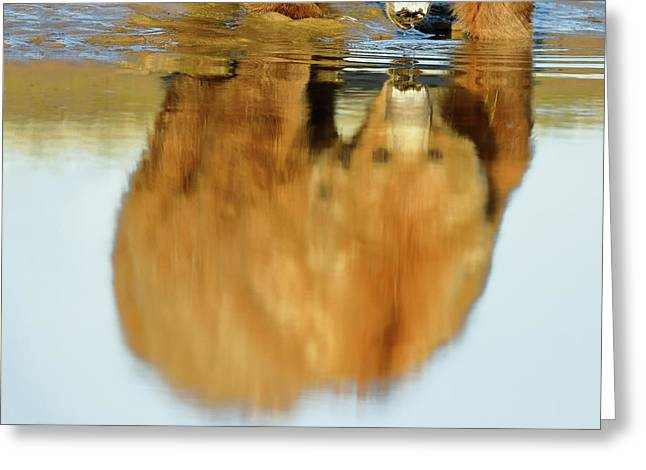 Mother Grizzly Reflection Greeting Card