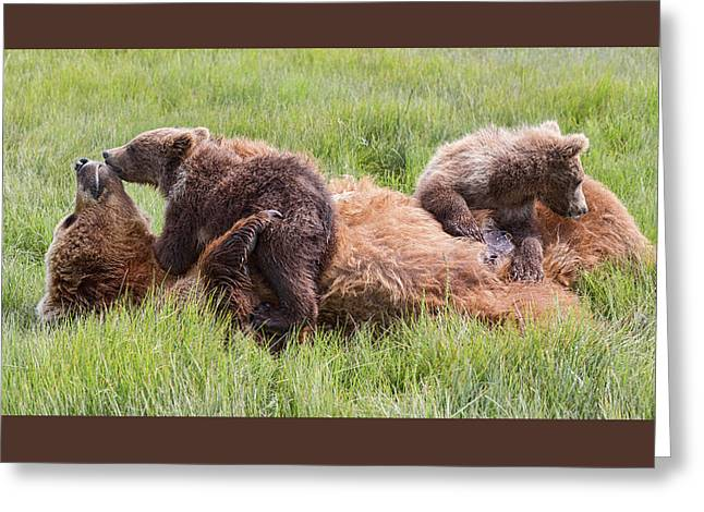 Mother Grizzly Suckling Twin Cubs Greeting Card
