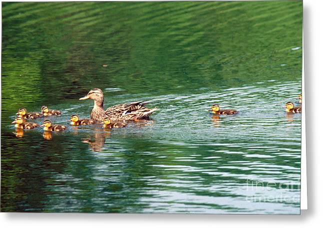 Mother Mallard And Young Greeting Card