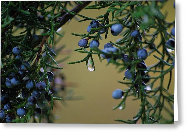Mother Nature's Tears Greeting Card by Trudi Southerland