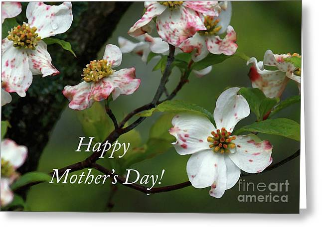 Mother's Day Dogwood Greeting Card by Douglas Stucky