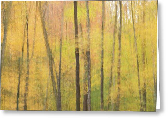 Motion In Color Greeting Card