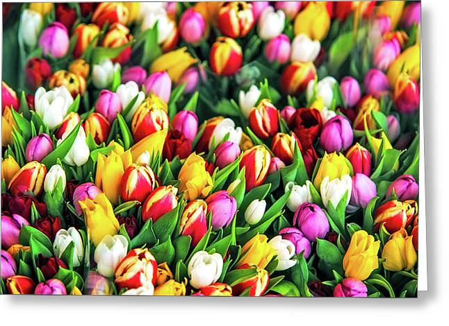 Motley Bunch Of Dutch Tulips Greeting Card by Jenny Rainbow