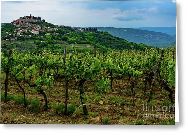 Motovun And Vineyards - Istrian Hill Town, Croatia Greeting Card