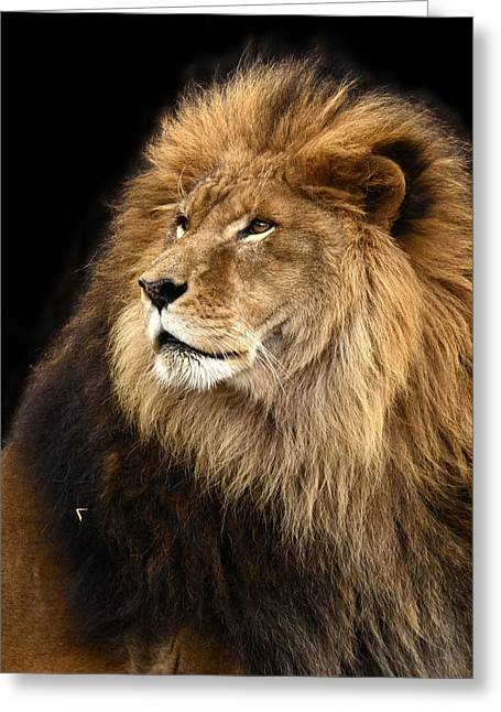 Moufasa The Lion Greeting Card
