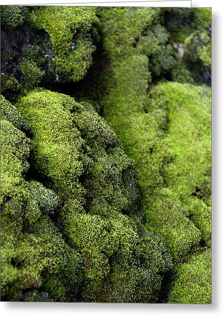 Mounds Of Moss Greeting Card