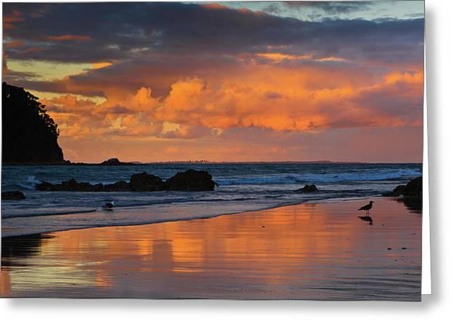 Ecology Greeting Cards - Mount Maunganui Beach Sunset Greeting Card by John Buxton