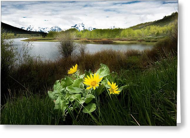 Mount Moran Spring Greeting Card