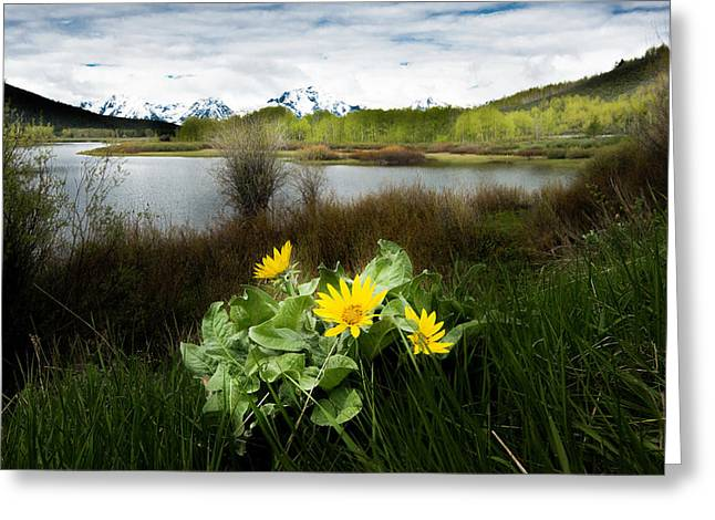 Mount Moran Spring Greeting Card