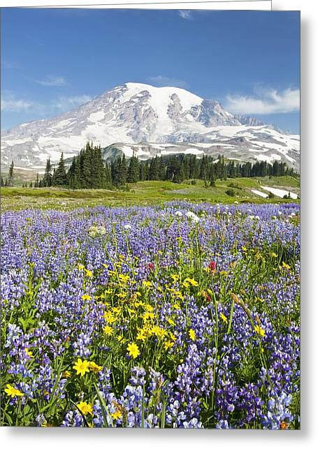 Mount Rainier National Park Greeting Card by Craig Tuttle
