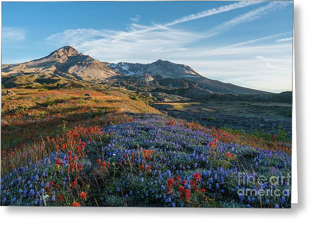 Mount St Helens Fields Of Spring Wildflowers Greeting Card