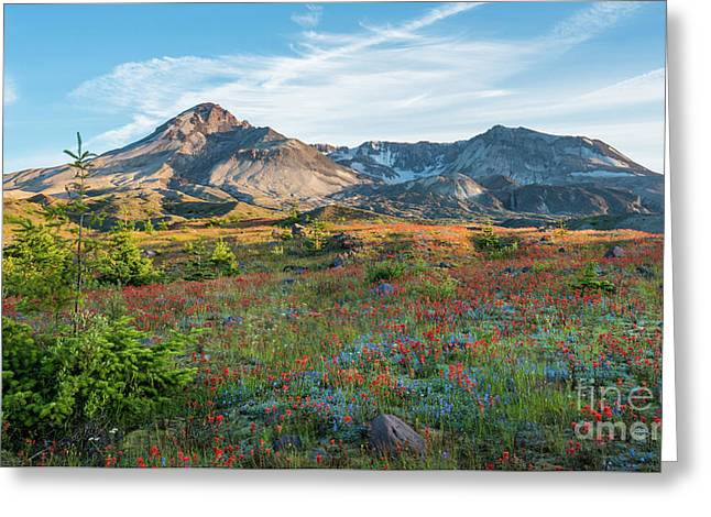 Mount St Helens Fields Of Wildflowers Greeting Card