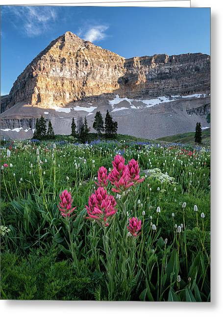 Mount Timpanogos Wildflowers Greeting Card by James Udall