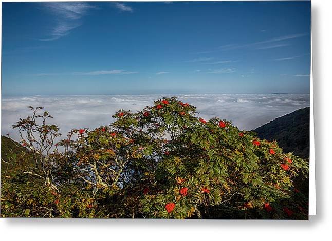 Mountain Ash Berries Above The Clouds Greeting Card by John Haldane