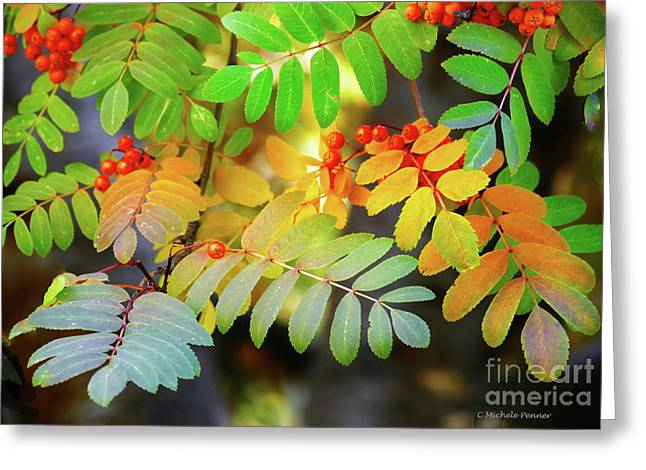 Mountain Ash Fall Color Greeting Card