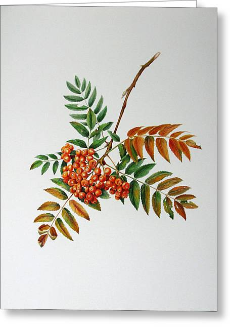 Mountain Ash  Greeting Card by Margit Sampogna