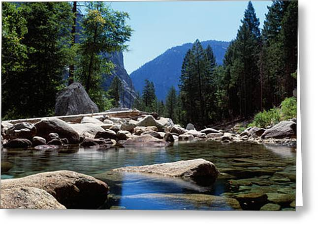Mountain Behind Pine Trees, Tenaya Greeting Card by Panoramic Images