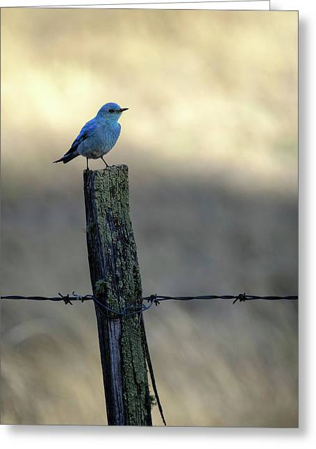 Mountain Bluebird On Wood Fence Post Greeting Card