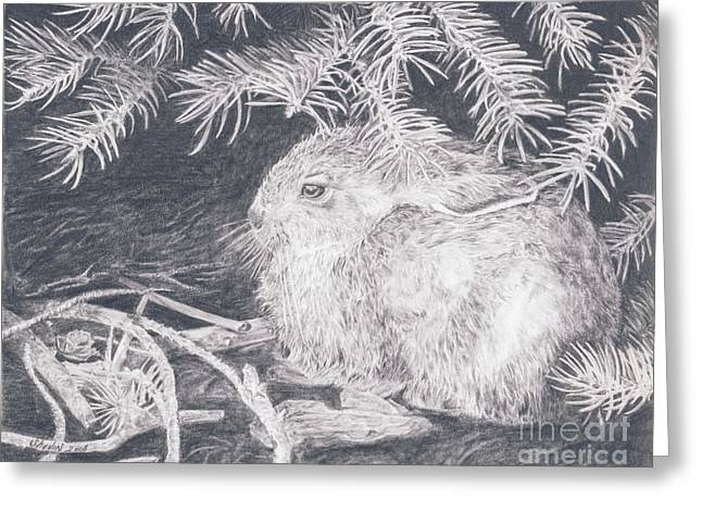 Mountain Cottontail Greeting Card by Shevin Childers