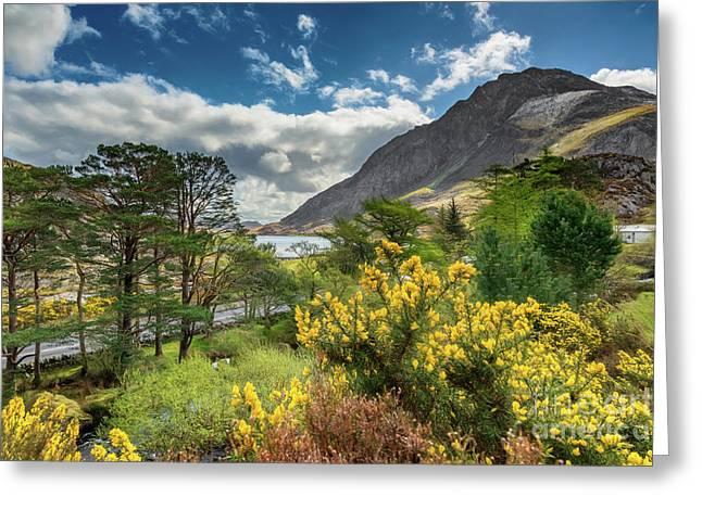 Mountain Flora Greeting Card