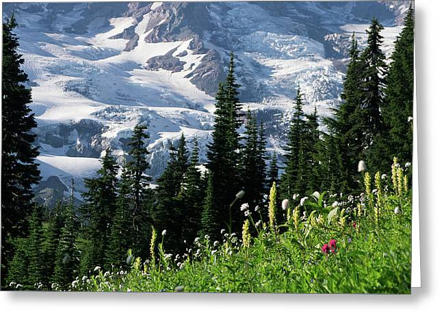 Mountain Flowers Greeting Card by Scott Nelson