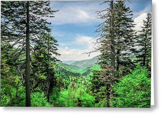 Mountain Forest Greeting Card